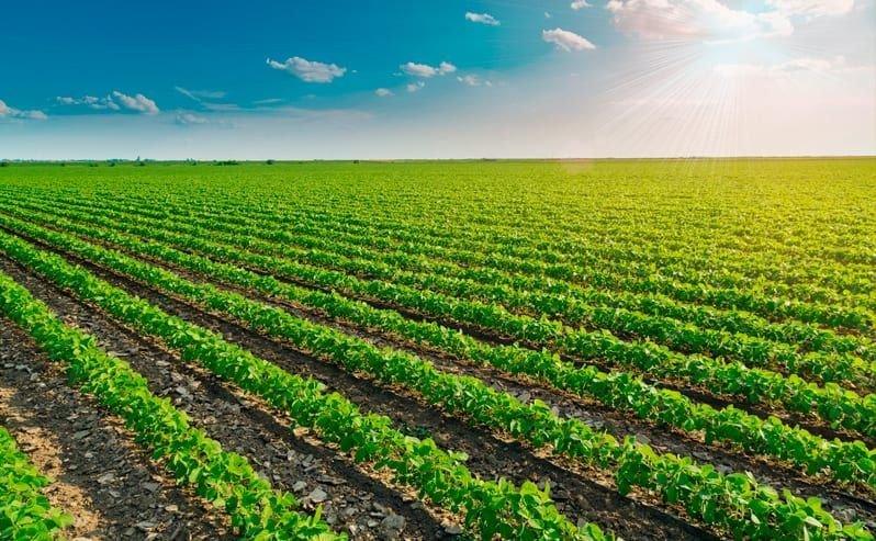 A Agrodefesa reduz vazio sanitário da soja em Goiás