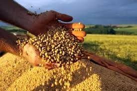 Brasil deve ter produção de grãos recorde em 2021